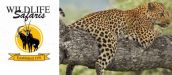 WILDLIFE SAFARIS - Kruger National Park Tours